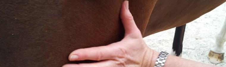 soins-energetiques-pour-les-chevaux